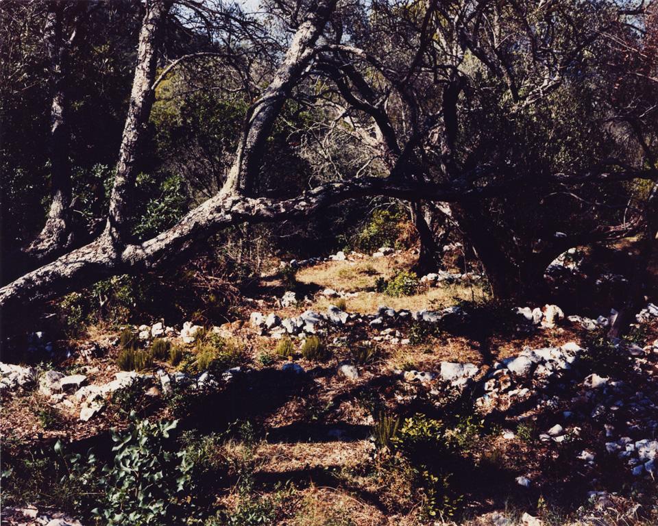 trees-grovel